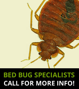 Bed Bug Specialists Leatherhead