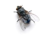 Flies Pest Control Leatherhead
