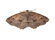 Moths Pest Control Leatherhead